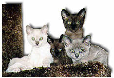 Four, bright eyed, kittens look down from their cat tree.